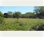 EASTHAMPTON LAND IN VILLAGE OVER AN ACRE!