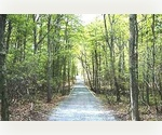 Amazing 5 Acres of Land, Brick Kiln Road, Hamptons